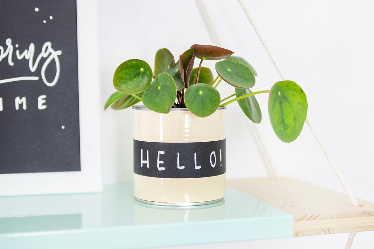 DIY Dosen für Pflanzen