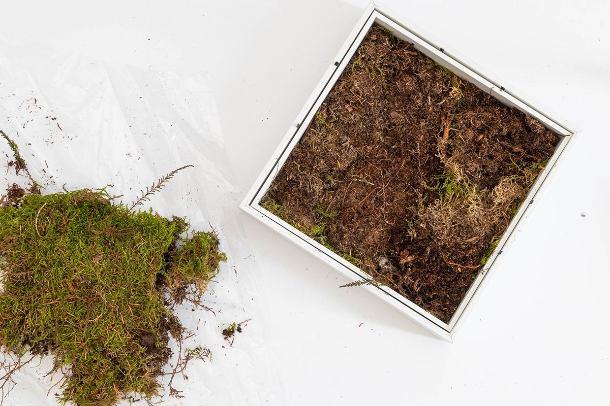 Bepflanzter Bilderrahmen mit Sukkulenten